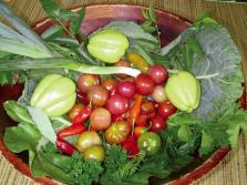 Sustainable-Agriculture_newsfull_h