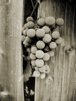 bW-grapes-on-vine